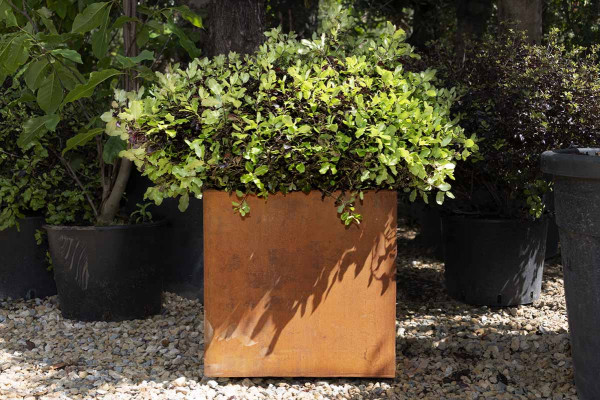 Image displaying Corten Steel Cube Planter (W 400 x H 400 x D 400mm). *Planting for illustrative purposes only.