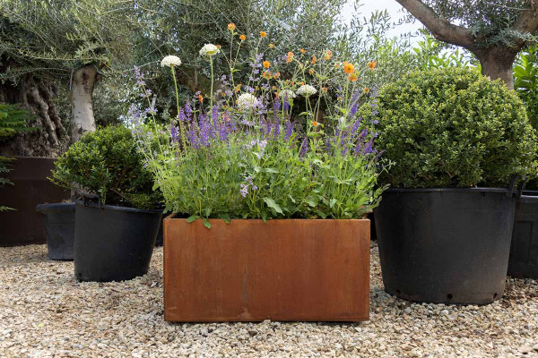 Image displaying Corten Steel Cube Trough Planter (W 800 x H 400 x D 400mm).  *Planting for illustrative purposes only.