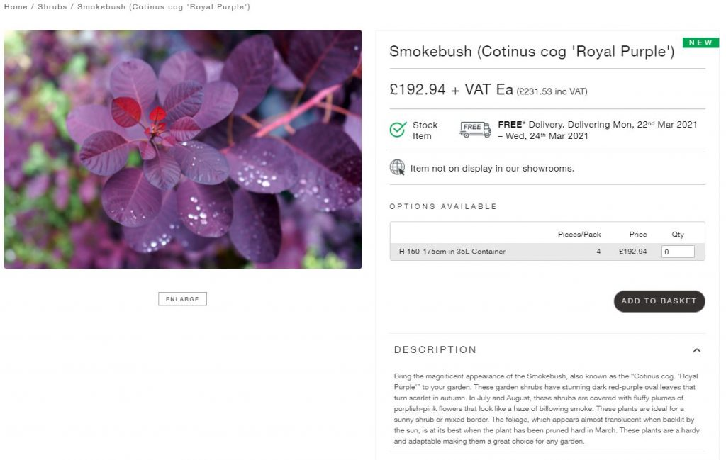 Form Plants and London Stone join forces. Buy Smokebush (Cotinus cog 'Royal Purple' online now